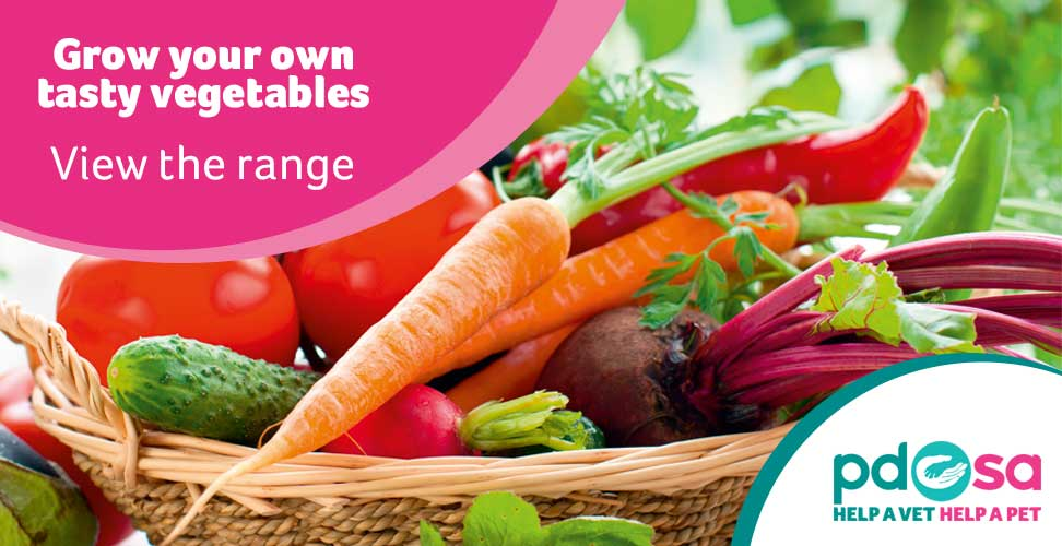 grow your own tasty vegetables