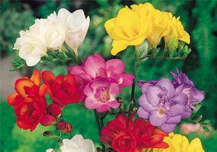 Garden Plants, Seeds and Equipment